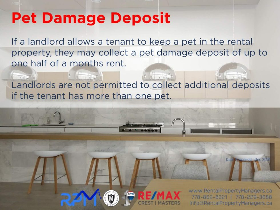 Rental Property Management Glossary - What is Pet Damage ...